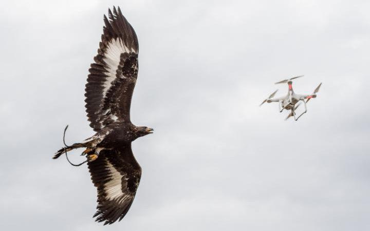 eagle_drone